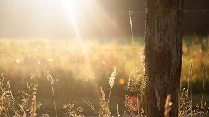 Creating Healing Environments